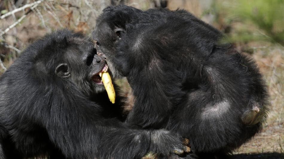 Sterke aap spreekt taal, zwakke aap spreekt dialect
